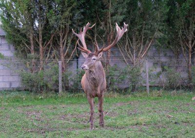 faune européenne (1)
