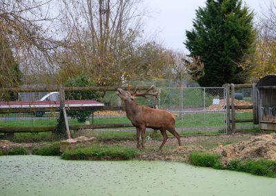 faune européenne (3)