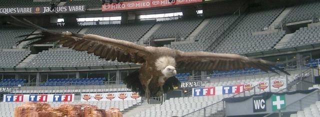 vautour 2